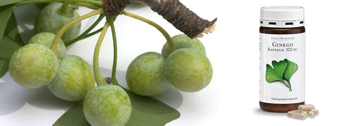 Ginkgo-biloba1
