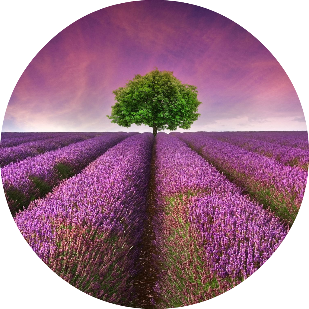 lavender-fields-pic-monkey