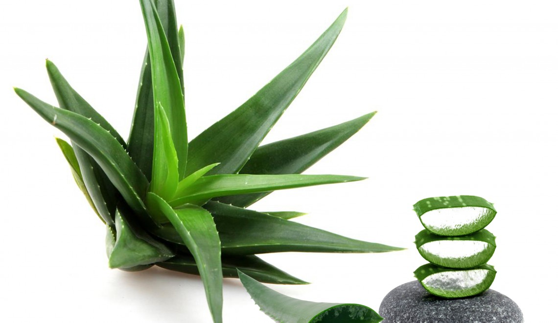 Aloe vera – un veritabil medicament natural